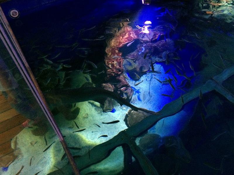 Sortie en famille aquarium Seaquarium Le Grau Du Roi Img_2131