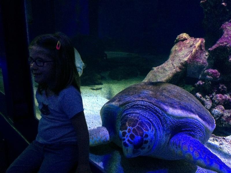 Sortie en famille aquarium Seaquarium Le Grau Du Roi Img_2133