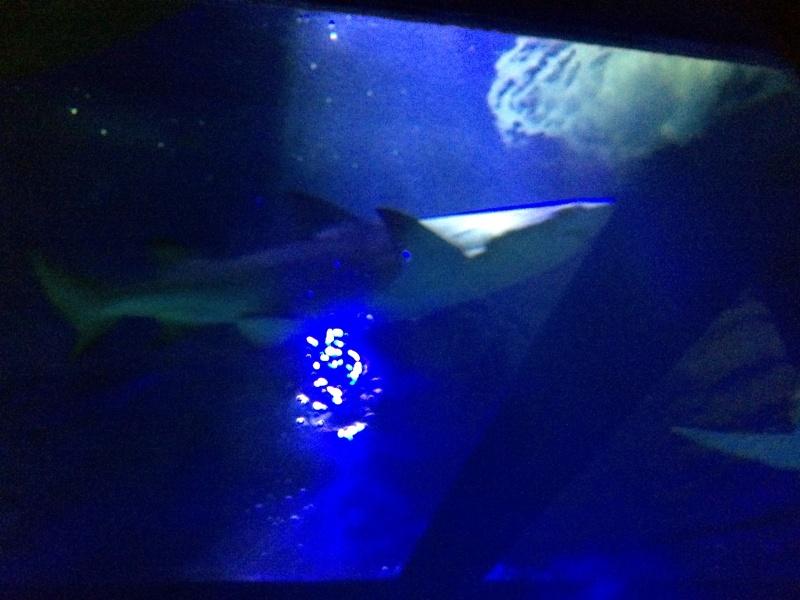 Sortie en famille aquarium Seaquarium Le Grau Du Roi Img_2138