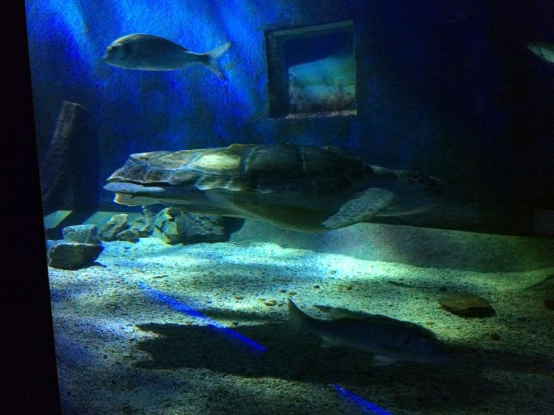 Sortie en famille aquarium Seaquarium Le Grau Du Roi Img_2139