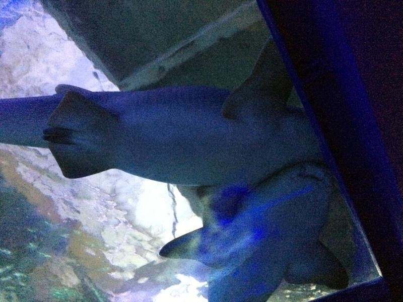 Sortie en famille aquarium Seaquarium Le Grau Du Roi Img_2140