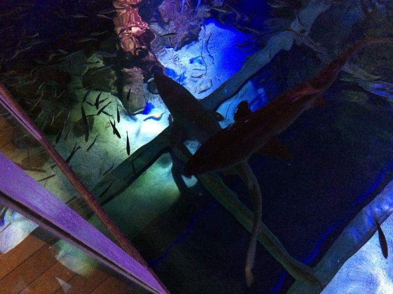 Sortie en famille aquarium Seaquarium Le Grau Du Roi Img_2143