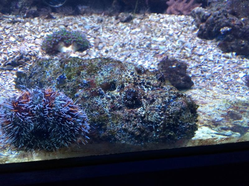 Sortie en famille aquarium Seaquarium Le Grau Du Roi Img_2146