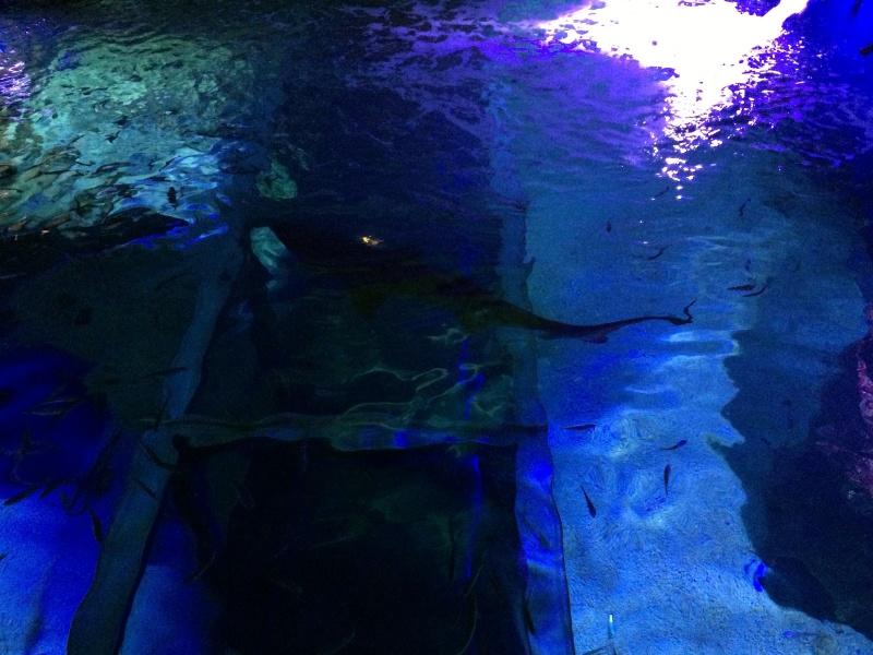 Sortie en famille aquarium Seaquarium Le Grau Du Roi Img_2147