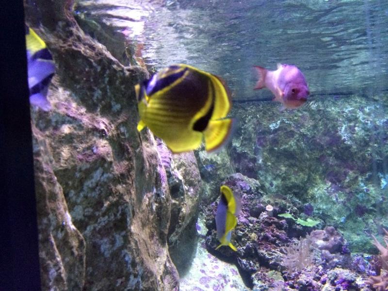 Sortie en famille aquarium Seaquarium Le Grau Du Roi Img_2150