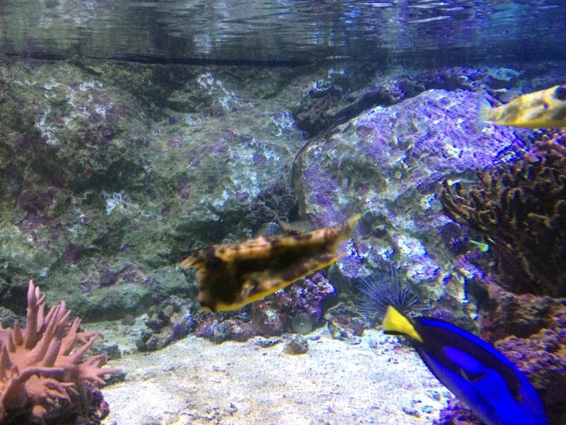 Sortie en famille aquarium Seaquarium Le Grau Du Roi Img_2151