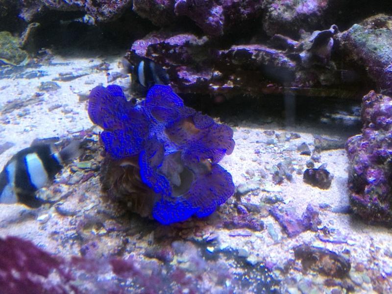 Sortie en famille aquarium Seaquarium Le Grau Du Roi Img_2152