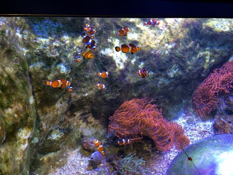 Sortie en famille aquarium Seaquarium Le Grau Du Roi Img_2154