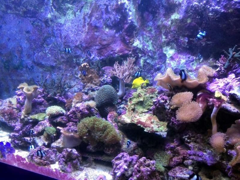 Sortie en famille aquarium Seaquarium Le Grau Du Roi Img_2156