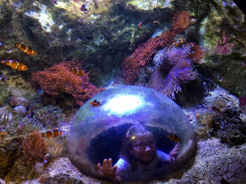 Sortie en famille aquarium Seaquarium Le Grau Du Roi Img_2157