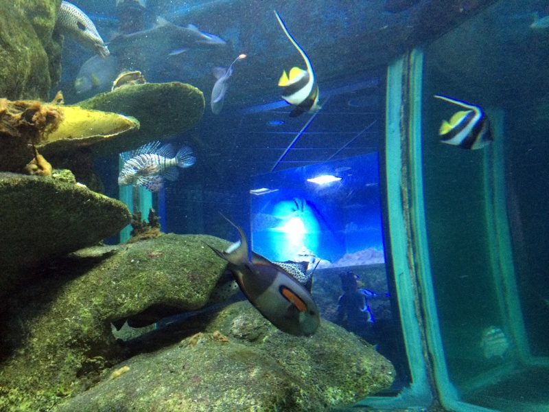 Sortie en famille aquarium Seaquarium Le Grau Du Roi Img_2158