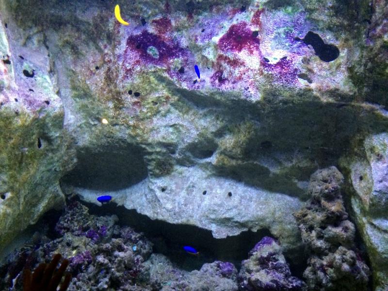 Sortie en famille aquarium Seaquarium Le Grau Du Roi Img_2159