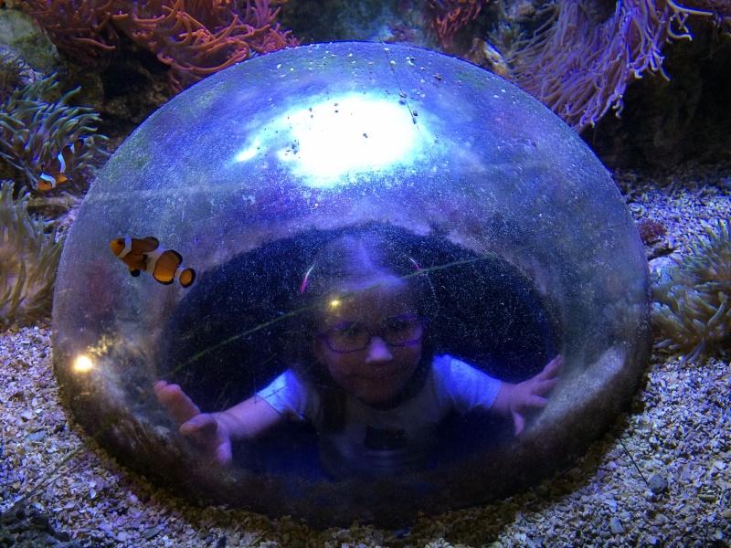 Sortie en famille aquarium Seaquarium Le Grau Du Roi Img_2160