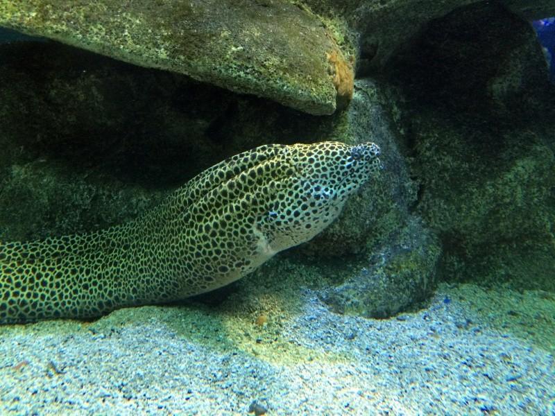Sortie en famille aquarium Seaquarium Le Grau Du Roi Img_2162
