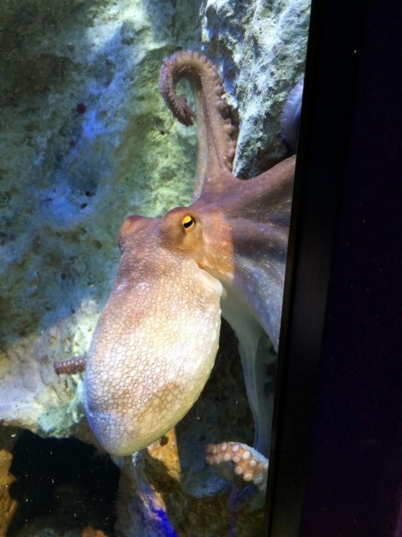 Sortie en famille aquarium Seaquarium Le Grau Du Roi Img_2164