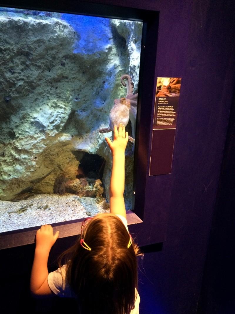 Sortie en famille aquarium Seaquarium Le Grau Du Roi Img_2165