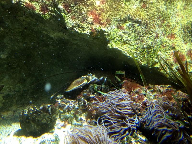 Sortie en famille aquarium Seaquarium Le Grau Du Roi Img_2167