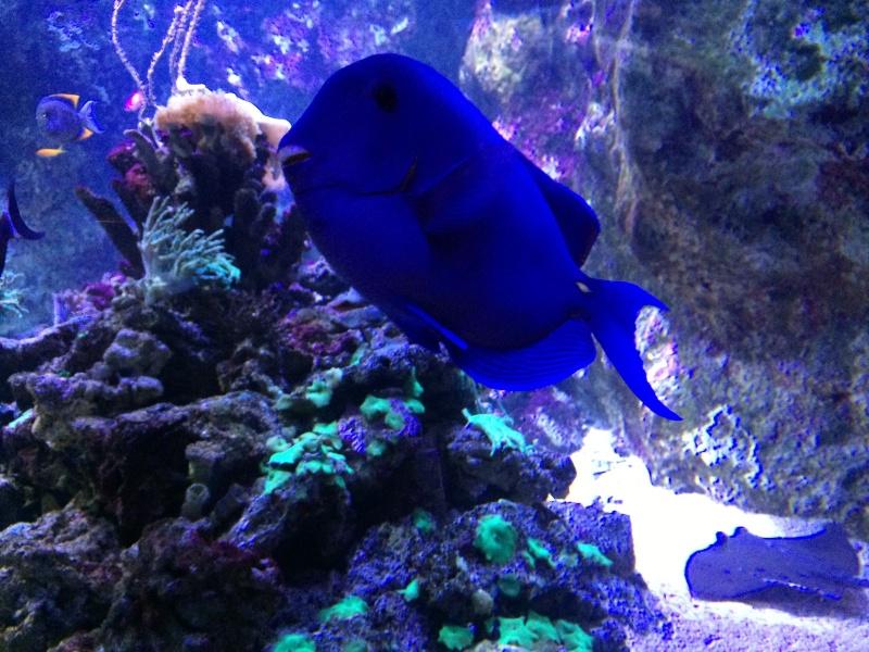 Sortie en famille aquarium Seaquarium Le Grau Du Roi Img_2170