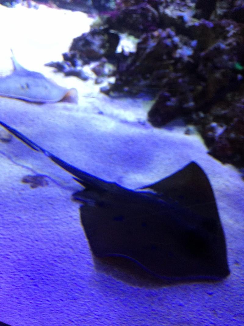 Sortie en famille aquarium Seaquarium Le Grau Du Roi Img_2171