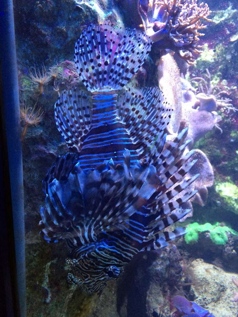 Sortie en famille aquarium Seaquarium Le Grau Du Roi Img_2172