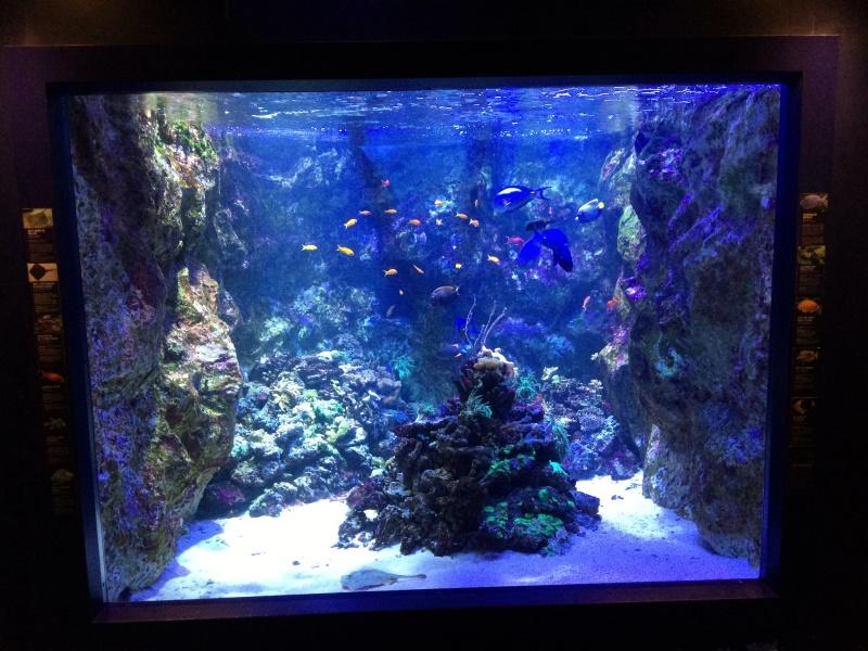 Sortie en famille aquarium Seaquarium Le Grau Du Roi Img_2173