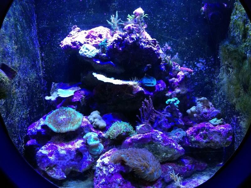 Sortie en famille aquarium Seaquarium Le Grau Du Roi Img_2174
