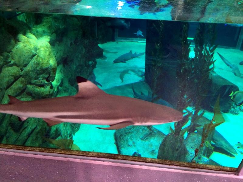 Sortie en famille aquarium Seaquarium Le Grau Du Roi Img_2210