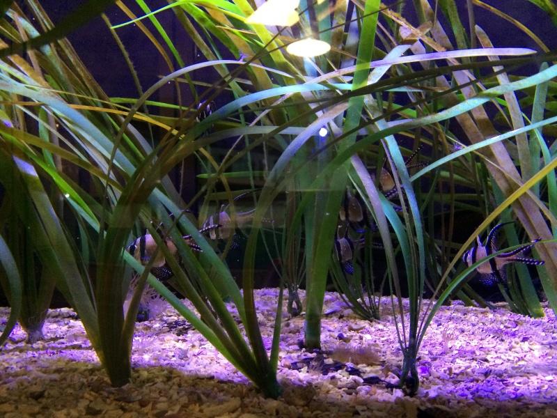 Sortie en famille aquarium Seaquarium Le Grau Du Roi Img_2212