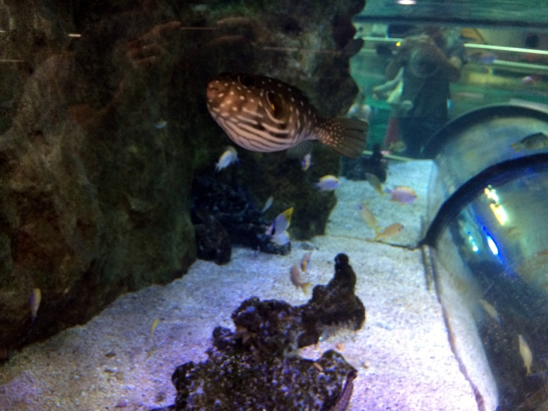 Sortie en famille aquarium Seaquarium Le Grau Du Roi Img_2214
