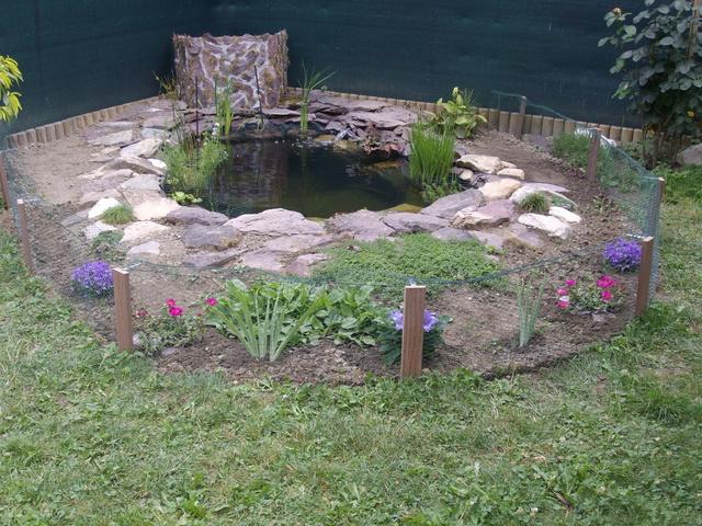 Aide filtration naturelle pour bassin extérieur  - Page 3 Imgp0223