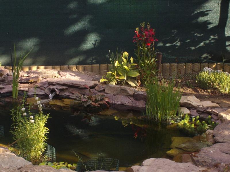 Aide filtration naturelle pour bassin extérieur  - Page 3 Imgp0225