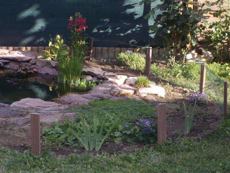 Aide filtration naturelle pour bassin extérieur  - Page 3 Imgp0226