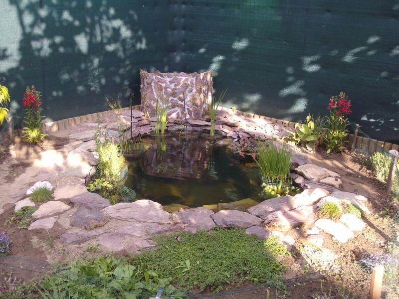 Aide filtration naturelle pour bassin extérieur  - Page 3 Imgp0228