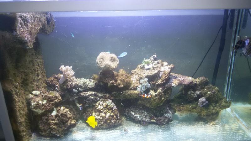 démarrage de mon aquarium eau de mer ? - Page 12 20160717