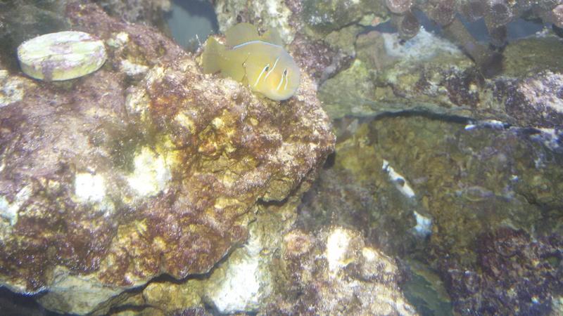 démarrage de mon aquarium eau de mer ? - Page 12 20160719