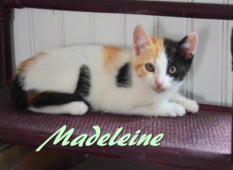 madeleine - Madeleine-chatonne tricolore-née le 15/03/2016 2dsc_811