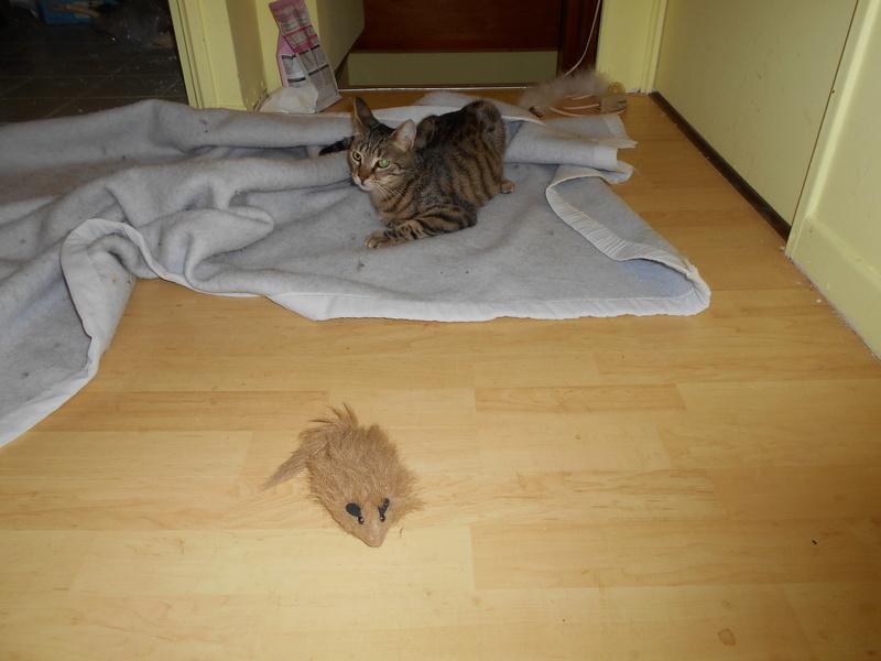 Des souris, encore des souris et... Dscn0014