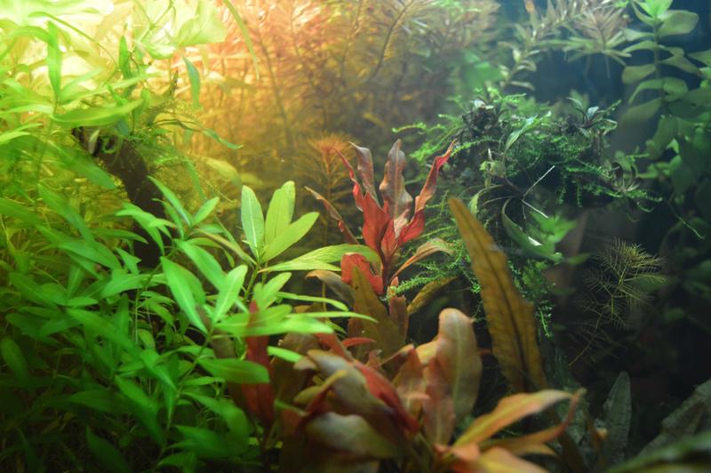 Ambrer l'aquarium / ajout feuilles Dsc_0021