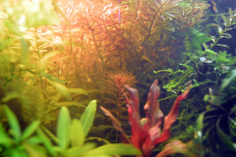 Ambrer l'aquarium / ajout feuilles Dsc_0023