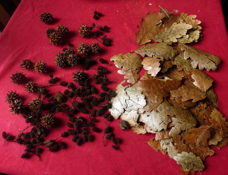 Ambrer l'aquarium / ajout feuilles P1140910
