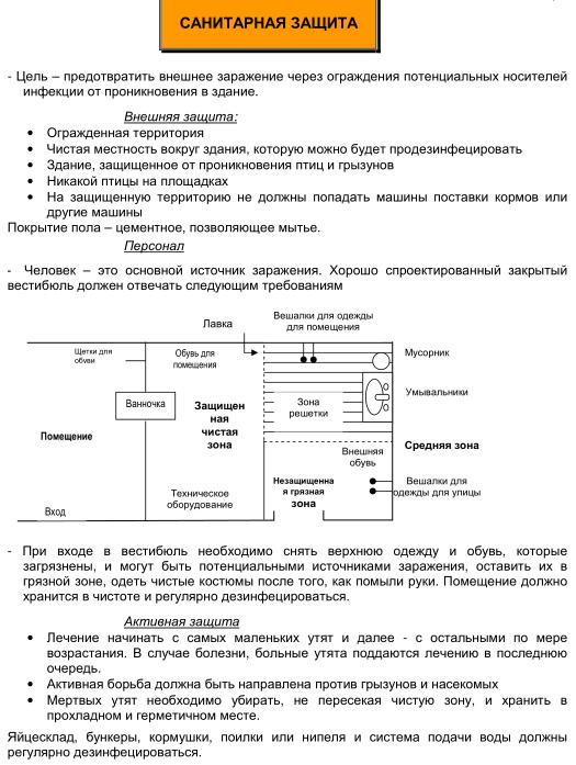 Мускусные утки (индоутки) - ч.6 Image196