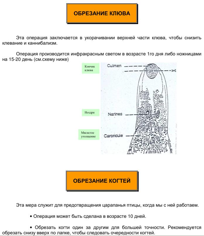Мускусные утки (индоутки) - ч.6 Image203