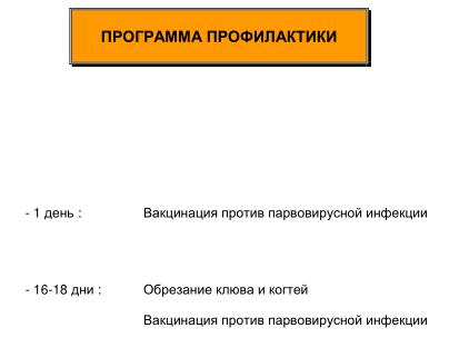 Мускусные утки (индоутки) - ч.6 Image204