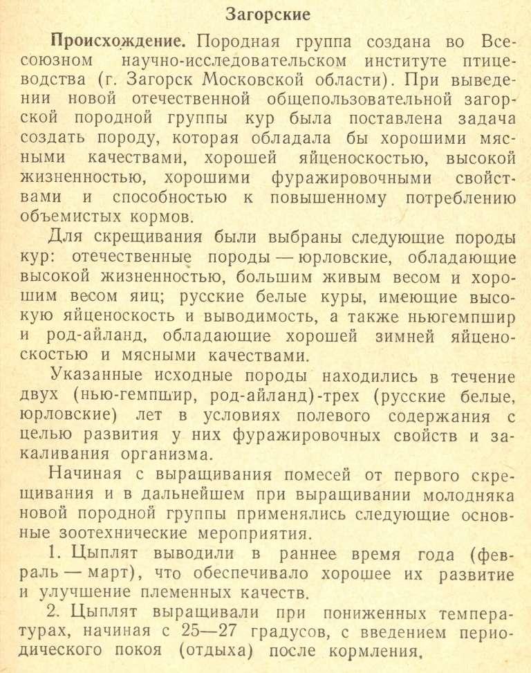 Загорская лососевая порода кур - Страница 2 Izaeaz73