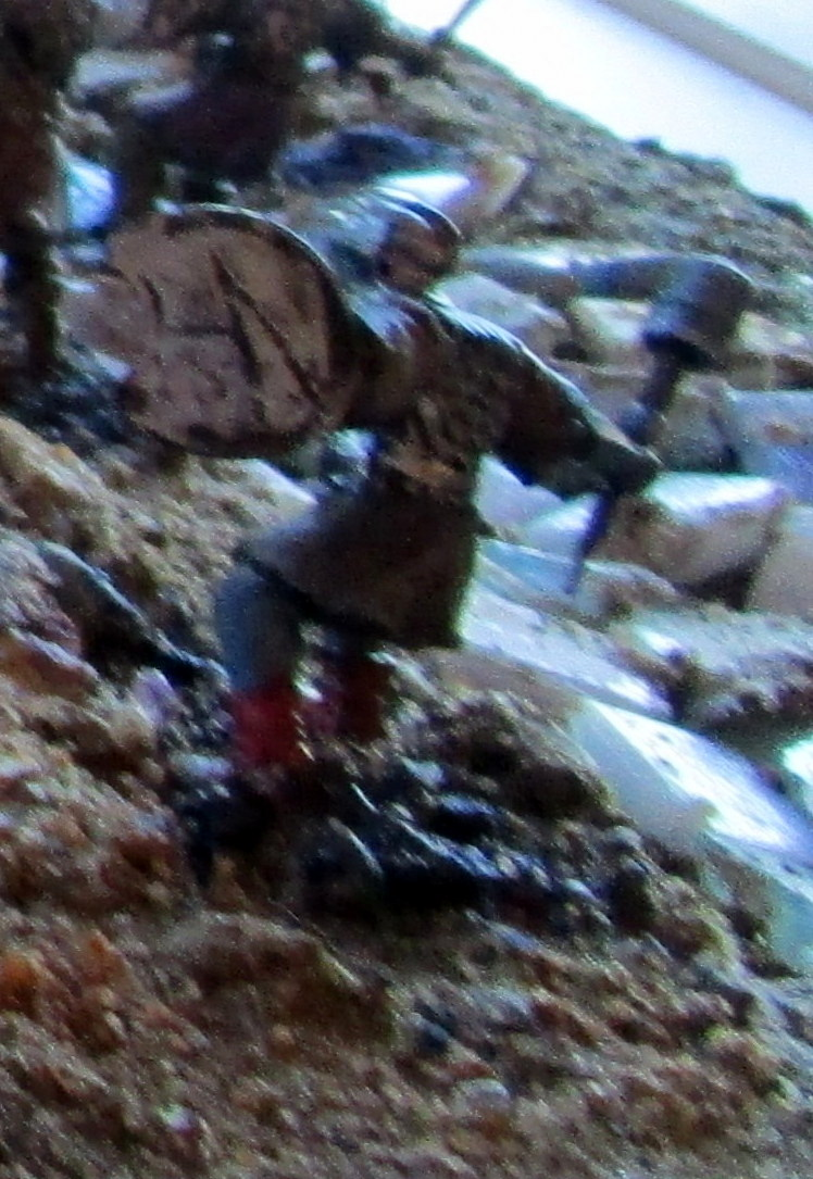 Archers du Gondor en 28mm 2016_010