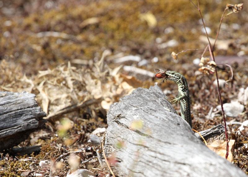 [Fil ouvert à tous] Reptiles, serpents, tortues, amphibiens, ... - Page 5 Img_0510