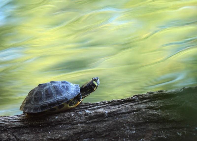 [Fil ouvert à tous] Reptiles, serpents, tortues, amphibiens, ... - Page 5 Img_0910