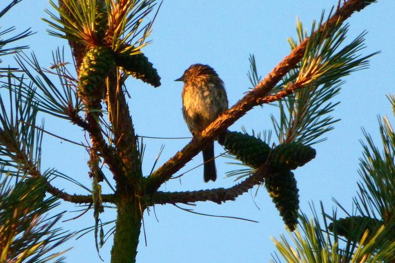 Jeune oiseau ? Quelle espèce ? P1220011