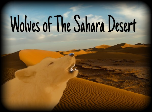 Wolves of The Sahara Desert