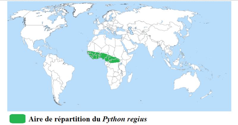 [Fiche] Python regius 310
